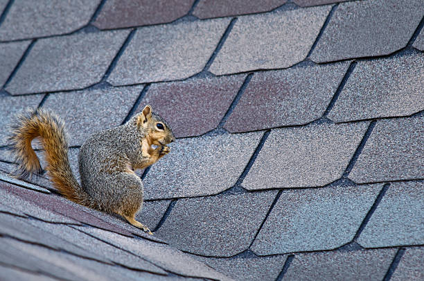 SQUIRREL PROOFING YOUR HOME FOR THE SPRING SEASON